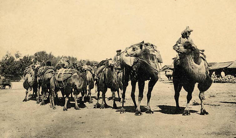 Unique CARAVANS CAMELS AND THE SILK ROAD  Facts And Details